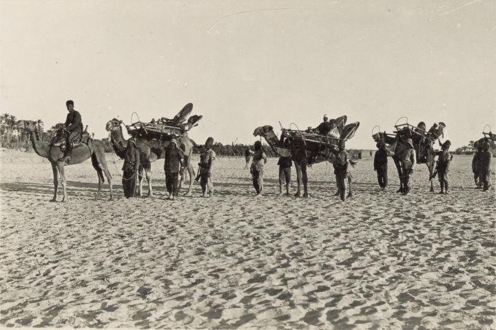 גמלים נושאי אלונקות במהלך הלחימה בצפון סיני, 1917, המקור: ספריית הקונגרס, אוסף מאטסון